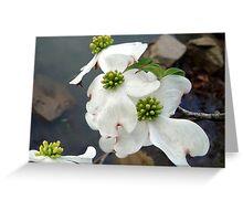 Dogwood Pond Greeting Card