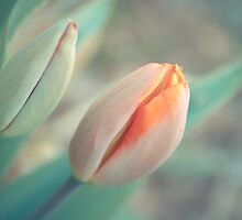 Spring is there! by fcomphoto