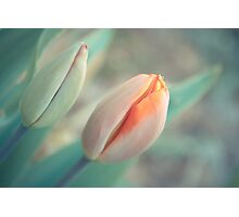Spring is there! Photographic Print