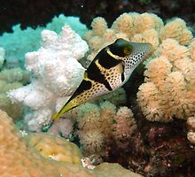 Great Barrier Reef I by Paul Duckett