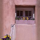 Pansies in Santa Fe by Jing3011