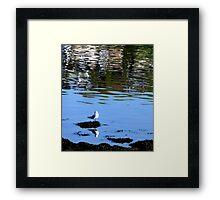 Bird Watching Framed Print