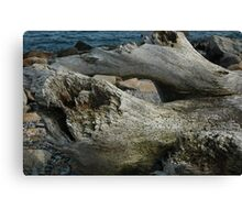 Natural History 2 Canvas Print