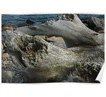 Natural History 2 Poster