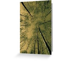English Forest Trees  Greeting Card