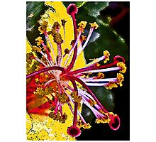 Spring Fantasy Photographic Print