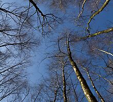 Epping Forest trees, Essex, England by DavidHornchurch