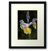 Iris Flower And Her Wings Framed Print
