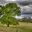 Every Green Tree by WagnonPhotos