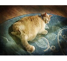 Fat Cat on a Rug Photographic Print