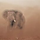 Charging elephant by Christina Brundage