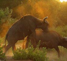 Wild ride by Explorations Africa Dan MacKenzie