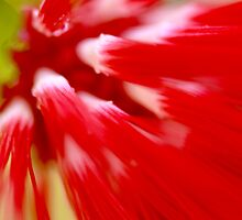 cascade in red by lensbaby