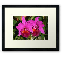 Bright Pink Orchids Framed Print