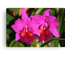 Bright Pink Orchids Canvas Print