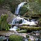 Coal Creek Falls by YogiColleen