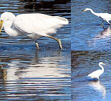 Collage of White Egrets in the Lake by alycanon