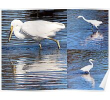 Collage of White Egrets in the Lake Poster