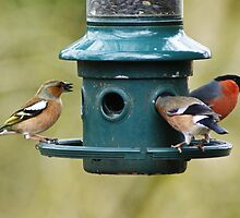 A Feast For Finches by Jamie  Green