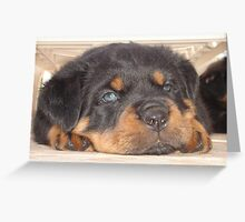Adorable Rottweiler Puppy With Blue Eyes Greeting Card