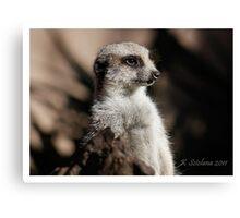 Meerkat in the shadow Canvas Print