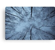 Epping Forest trees, Essex, England Canvas Print