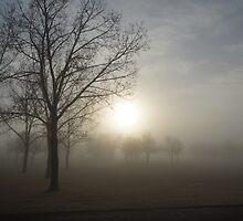 Morning Fog by wwyz