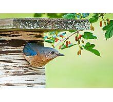 In Mrs. Bluebird's Garden Photographic Print