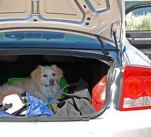I Wana Go Home!!! by Jennifer Hulbert-Hortman