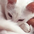 Softness by Hanyes