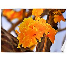 Silver Trumpet Tree Bloom Poster