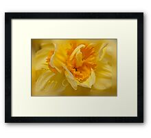 Easter card - daffodil Framed Print