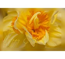 Easter card - daffodil Photographic Print