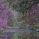 Davis Arboretum Creek by Diego Re
