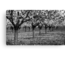 trees in raw Canvas Print