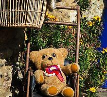Prized Teddy by Susie Peek