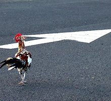 How Chickens Cross Roads by Hapatography