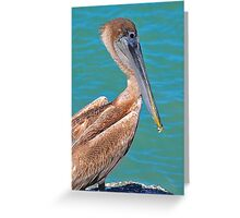 Pelican on the coast Greeting Card