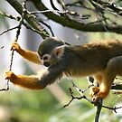Just hanging about by Tibbs