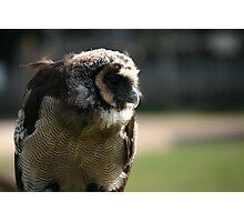 Feathery companion Photographic Print