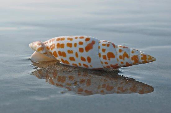 Seashell by the Seashore by David Alexander Elder