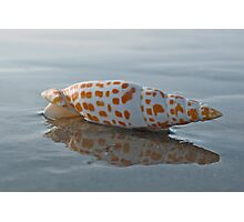 Seashell by the Seashore Photographic Print