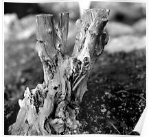 Tree Stump in the Peoples Garden, Phoenix Park Poster