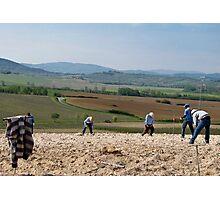 men planting vines 2 Photographic Print