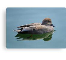 Male Gadwall Duck  Canvas Print