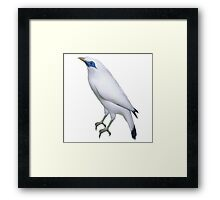 bird white Framed Print