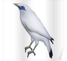 bird white Poster