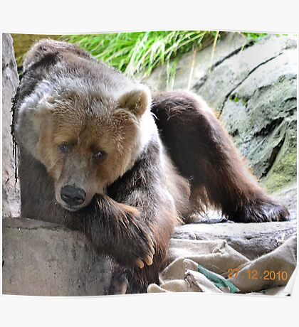 """Bethyl"" the Kodiak Bear Poster"