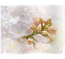 Spring Lilacs Poster