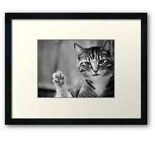 Bad Kitty - Double Take Framed Print